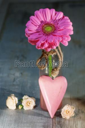 gerbera fiore con un cuore rosa