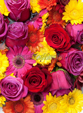 flowers, tightly, packed, together - 18161630