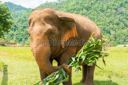 elefante nel parco naturale protetto