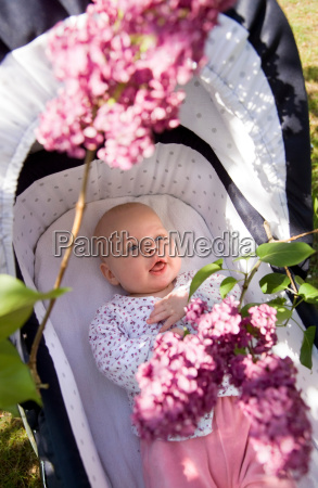 baby in pram with lilac blossom