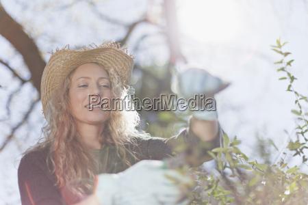 woman pruning leaves on bush