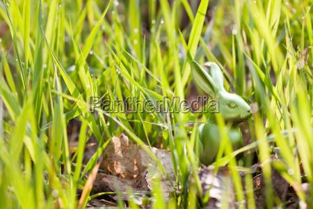 easter, bunny, hidden, in, long, grass - 18314346
