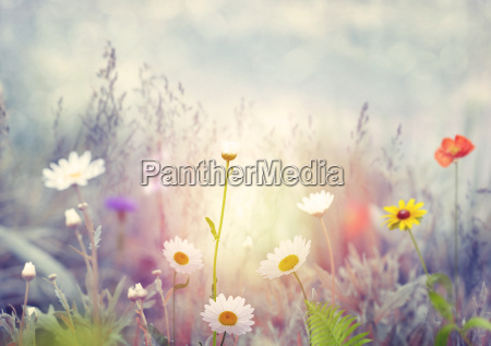 campo con fiori selvatici