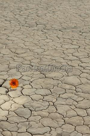 flower growing in desert landscape