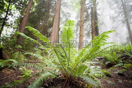 plant in forest