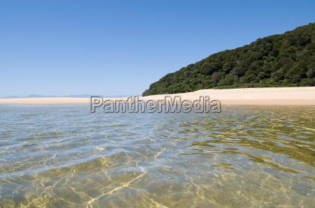 albero collina riva del mare spiaggia