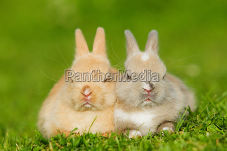 two rabbits sitting on grass