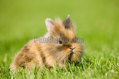one rabbit sitting on grass