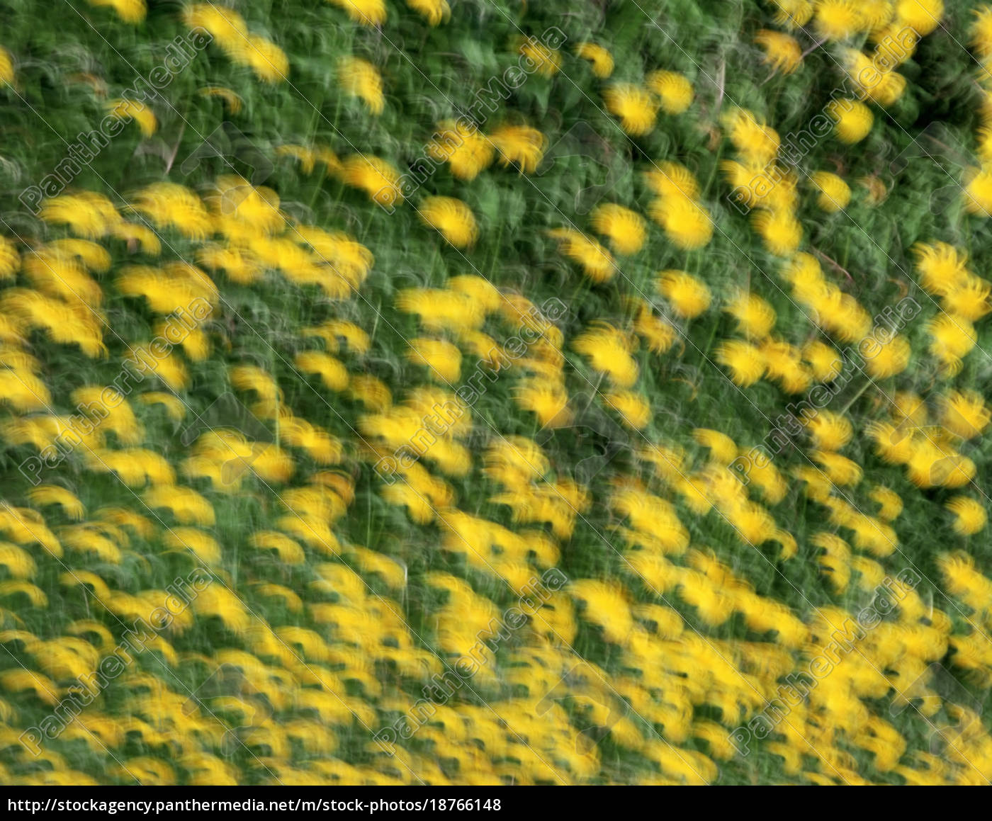 field, of, flowers - 18766148