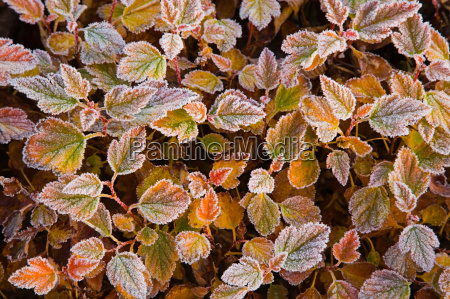 frost on leaves of plant