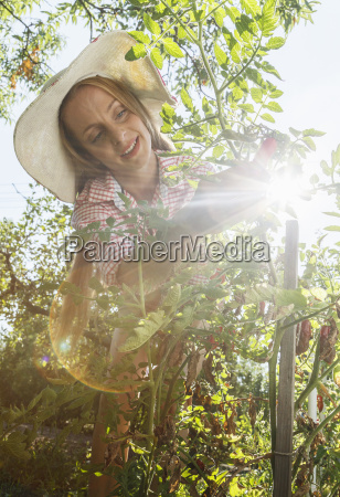 mid adult woman in garden picking