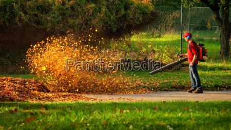 ambiente foglie foglie di autunno autunnale