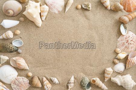 cozze nella sabbia