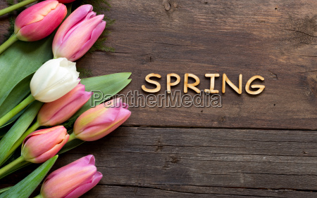 accordo fiore pianta legno fioritura fiorire