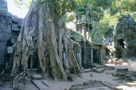 tree roots growing over ruins at