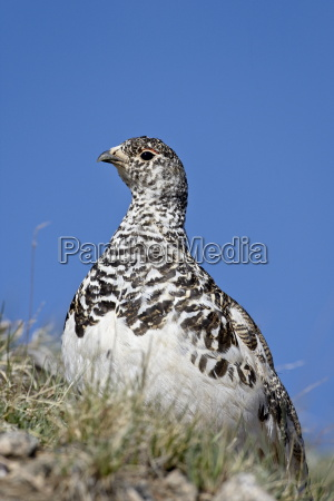 profilo animale uccello selvaggio stati uniti
