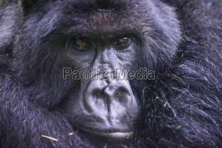 parco nazionale africa ritratto nero orizzontale