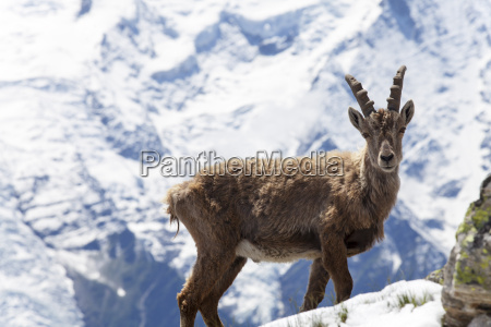 alpi alpino capricorno francese montagna