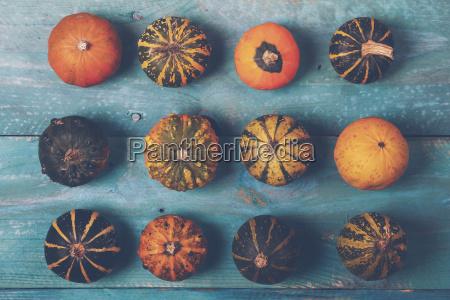file di zucche ornamentali su legno