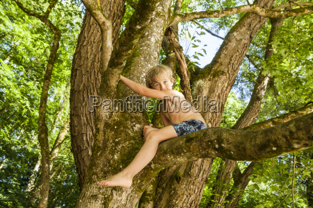 little boy climbing on a tree