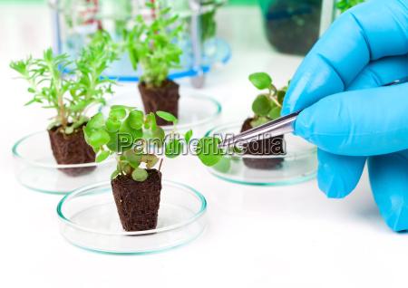 ricerca verde tecnologia giovani ragazzi ragazze