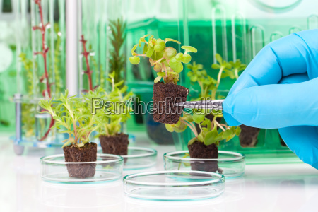 ricerca verde giovani ragazzi ragazze laboratorio