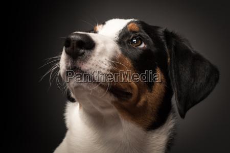 animale domestico cane cucciolo ubbidiente