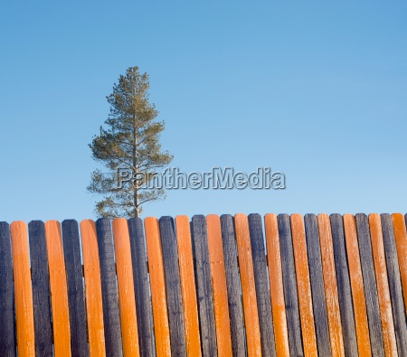 orange black wooden fence tree in