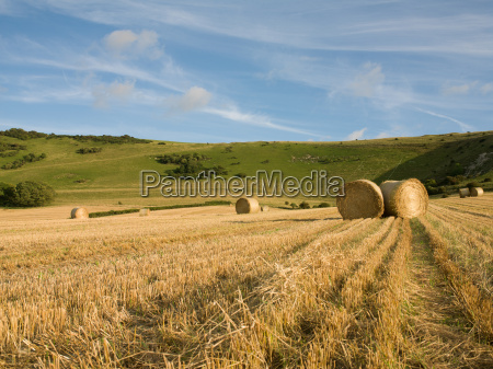 harvested field and straw bales wilmington