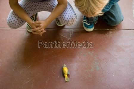two children looking at dead bird