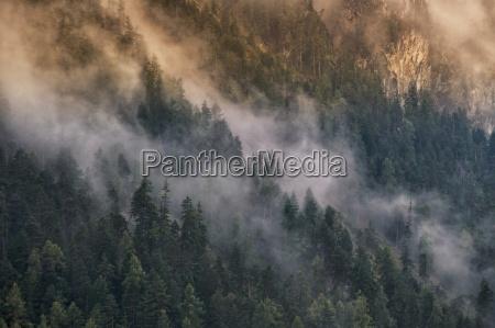 montagne nebbia abeti misterioso raggio di