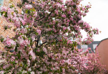primo piano di belle ramo fiorito