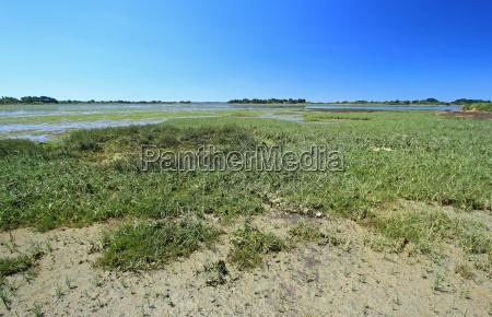 salt marsh in brittany atlantic