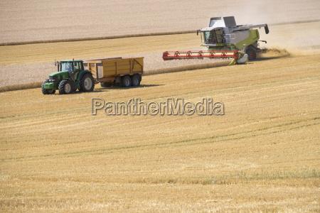 combine harvester harvesting wheat crop in