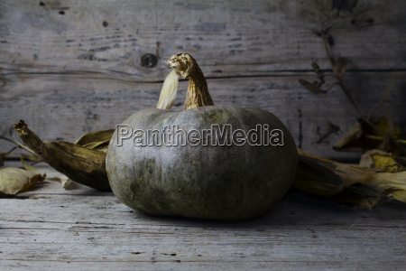 festeggiare festeggia autunnale mais pettine intaglio