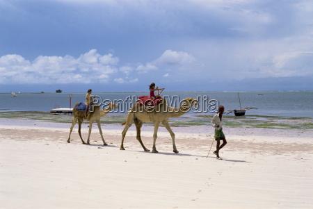 cammelli per i turisti nyali beach