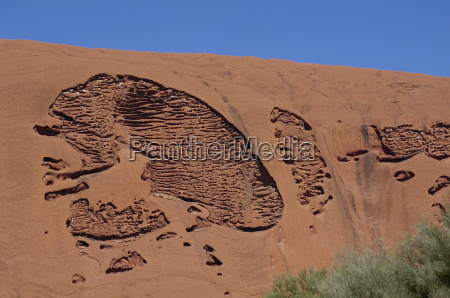 australia orizzontale allaperto cranio teschio pacifico