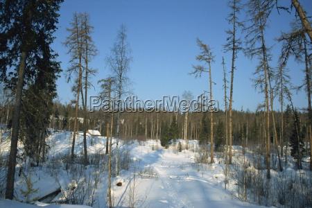 viaggio viaggiare albero alberi inverno europa
