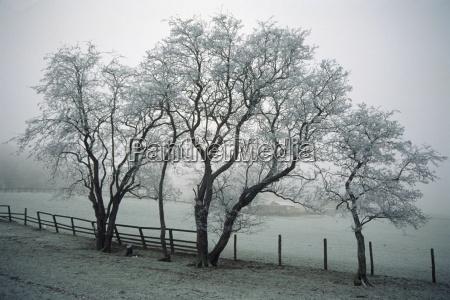 viaggio viaggiare albero alberi inverno botanica