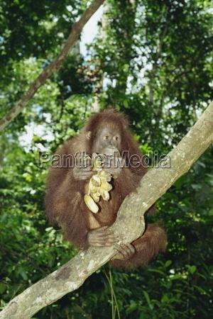 viaggio viaggiare asia animali malaysia borneo