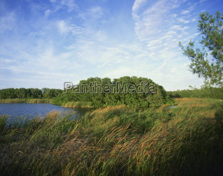 canne e corso dacqua everglades national