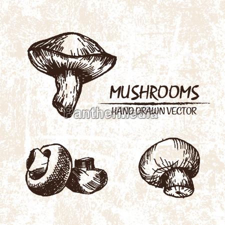 funghi dettagliati di vettore di digital