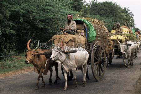 viaggio viaggiare colore animale traffico asia