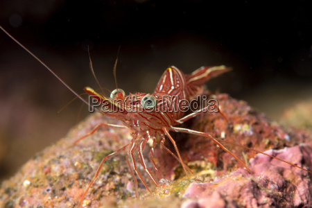 gambe colore animale fauna animali pesce