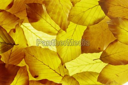 viaggio viaggiare foglie botanica orizzontale fotografia