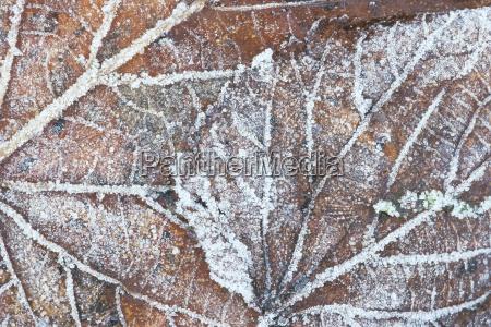 inverno foglie orizzontale gelo fuori fotografia