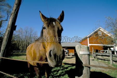 viaggio viaggiare colore americano cavallo animale