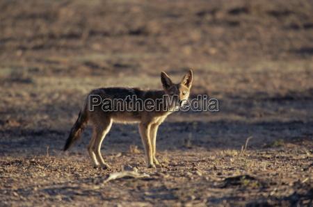 viaggio viaggiare ambiente colore deserto animale