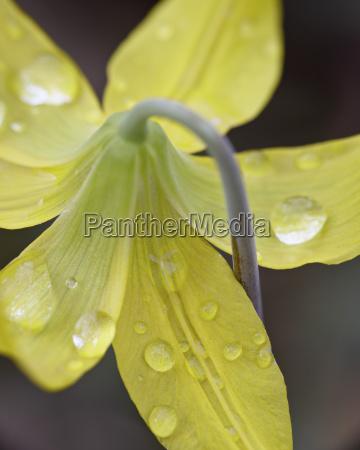 colore fiore pianta parco nazionale fioritura