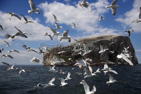 volo animali uccelli europa orizzontale allaperto